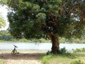LOLEI TRAVEL - Chau Srei Vibol Wassergraben